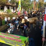 LEBARAN 2017 : Sapi-Sapi di Lereng Merapi Boyolali Juga Tak Mau Kalah Ikut Bakdan Ketupat