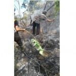 KEBAKARAN PONOROGO : Kejatuhan Balon Udara, Hutan Slahung Terbakar