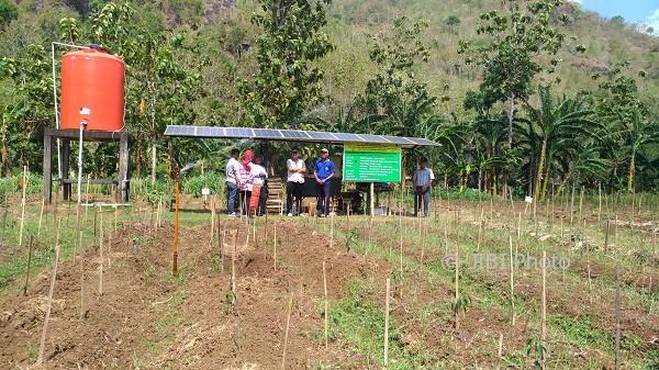 Sebuah pondok beratapkan papan panel surya penyerap energi matahari berdiri di sepetak sawah di Dusun Kedungmiri, Rabu (26/7/2017). Sementara sejumlah kran impact sprinkler terpancang di tengah sawah menyemprotkan air menyirami tanaman. Dua teknologi itu memudahkan pekerjaan petani di Kedungmiri. (Bhekti Suryani/JIBI/Harian Jogja)