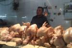 Harga Daging Ayam di Jogja Tak Terpengaruh Bencana