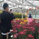 WISATA SEMARANG : Menikmati Keindahan Bunga Krisan di Bandungan