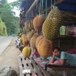 WISATA PONOROGO : Gagal Panen, Harga Durian Ngebel Capai Rp200.000/Buah