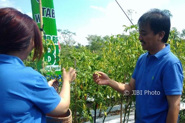 Anggota Komisi VI, DPR RI, Roy Suryo [kanan] memetik cabai saat melakukan kunjungan masa reses ke petani cabai di Dusun Tanjung I, Desa Bleberan, Kecamatan Playen. Minggu (30/7/2017). (JIBI/Irwan A. Syambudi)