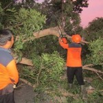 KECELAKAAN SRAGEN : Motor Tabrak Pohon Tumbang di Karangmalang, Pasutri Terluka