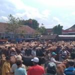 IDULADHA 2017 : Harga Sapi Jawa di Klaten Turun, Sapi Metal Naik Tipis