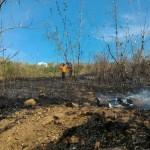 KEBAKARAN WONOGIRI : Dua Hari, Api Lumat 4,5 Hektare Hutan RPH Pulosari Selogiri