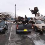 Di Kota Ini, Elang Botak Berkeliaran di Taman Layaknya Burung Dara