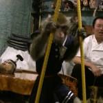 Seekor monyet dipekerjakan di Kawabukiya Tavern. (Istimewa)