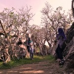 "Mirip Video Klip Linkin Park, ""Hutan"" Kamboja di Klaten Jadi Spot Selfie"