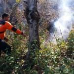 KEBAKARAN PONOROGO : Lahan Perhutani di Jambon Terbakar, Petugas Kesulitan Cari Air