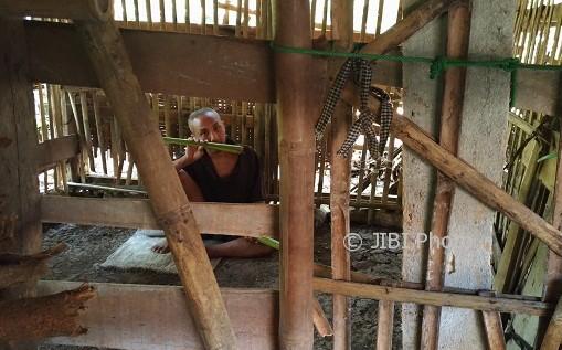 Thamrin, dikurung di kandang di dekat rumahnya di Dusum Dumpuh, Argodadi Sedayu, Bantul, Jumat (11/8/2017). (Bhekti Suryani/JIBI/Harian Jogja)