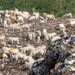 PRESTASI SEMARANG : Wali Kota Tripoli Tertarik Pengelolaan Sampah Ibu Kota Jateng