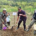 BENCANA PONOROGO : Cegah Tanah Longsor, 20.000 Pohon Karet Ditanam di Bekiring
