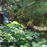 Arus Kali Blora Gerus Pekarangan, 4 Warga Juwiring Terancam Kehilangan Rumah
