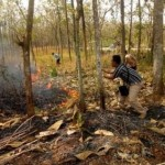 KEBAKARAN SRAGEN : 5 Hektare Hutan Rakyat Sambirejo Hangus Terbakar