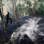 KEBAKARAN SRAGEN : Hutan Suaka Margasatwa Sambirejo Terbakar