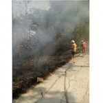 KEBAKARAN SRAGEN : 1,5 Hektare Kebun Jati Dekat Museum Sangiran Terbakar