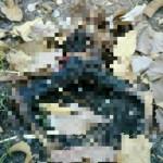 KISAH TRAGIS : 43 Hari Menghilang, Warga Gondang Sragen Ditemukan Tewas Terbakar di Hutan