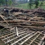 PETERNAKAN SRAGEN : Kandang Ayam di Tangen Ambruk, 600 Ekor Ayam Mati