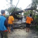 ANGIN KENCANG KLATEN : Belasan Pohon di Trucuk Tumbang Disapu Angin