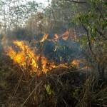 2 Bulan, Belasan Hektare Lahan di Wonogiri Terbakar Gara-Gara Ceroboh
