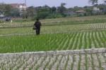 GAGASAN : Petani dan Tanah