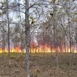KEBAKARAN WONOGIRI : Personel Linmas Diminta Ingatkan Warga soal Bahaya Membakar Sampah