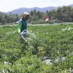 PERTANIAN KULONPROGO : Petani Andalkan Air dari Sumur Bor
