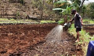 Sudarmadi, salah seorang petani di Dusun Tlogowaru, Giripurwo, Panggang sedang menyiram lahan yang digunakan untuk pembenihan dalam persiapan masa tanam pertama, Senin (25/9). (David Kurniawan/JIBI/Harian Jogja)