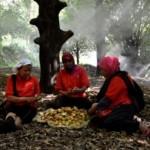 Foto Perkebunan Jateng Hasilkan Pala Eksport