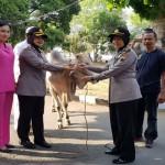 Wakapolres Salatiga, Kompol Dyah Wuryaning Hapsari (dua dari kiri) tengah menyerahkan hewan kurban sapi untuk disembelih pada Hari Raya Iduladha 2017 di Mapolres Salatiga, Jumat (1/9/2017). (Tribratanews.polressalatiga.id)