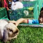 FOTO JATENG FAIR 2017 : Lembut Bulu Kelinci di PRPP Semarang