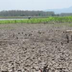 PERTANIAN MADIUN : Air Surut, Warga Manfaatkan Lahan Waduk Saradan untuk Bertani