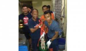 Sejumlah petugas damkar Solo menyelamatkan kucing tercebur sumur di Kestalan, Banjarsari, Rabu (18/10/2017). (Istimewa)