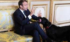 Emmanuel Macron bersama Nemo (Reuters)
