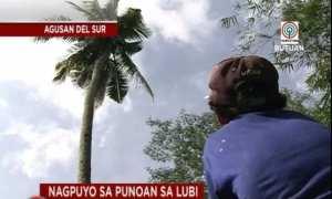 Pohon kelapa tempat Gilbert tinggal selama tiga tahun (Facebook)