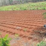 PERTANIAN WONOGIRI : Hujan Enggan Turun Lagi, Petani Pracimantoro Waswas Bibit Jagung Mati