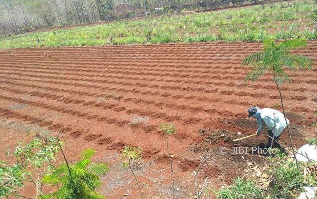 Seorang petani, Bukhori, 45, melubangi tanah di lahan yang digarapnya di Dusun Suruhan, Gambirmanis, Pracimantoro, Wonogiri, Kamis (5/10/2017). Sedianya dia menanam jagung setelah hujan kembali turun. (Rudi Hartono/JIBI/Solopos)