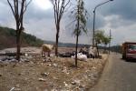 Sebuah Tempat Pembuangan Sampah Seluas 4,1 Hektare akan Dibangun di Prambanan