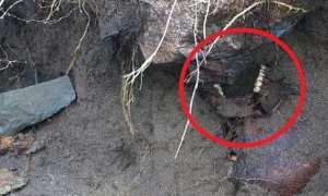 Temuan setelah badai Ophalia. (Istimewa/Dailymail.co.uk)