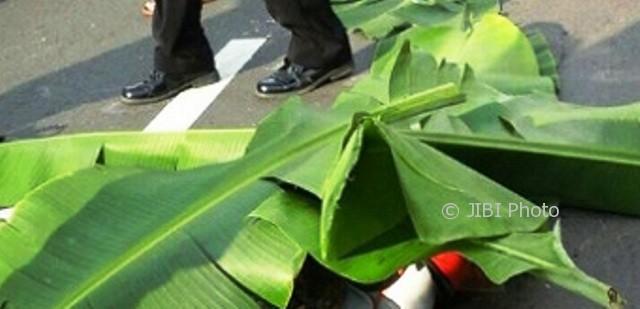 Jasad Lulut Fajarsari, 16, siswi SMKN 1 Bancak ditutup daun pisang setelah dilindas bus di jalur jalan Bringin-Kalimaling, wilayah Desa Rembes, Kecamatan Bringin, Kabupaten Semarang, Jateng, Senin (9/10/2017) sekitar pukul 15.30 WIB. (Facebook.com-Dwi Sriyanto)
