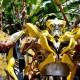 FOTO KERAJINAN SEMARANG : Kostum Transformers Tengaran ke Bali