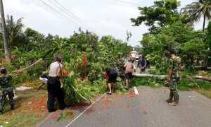 Anggota Polsek Manyaran dan anggota koramil bersama warga mengevakuasi pohon tumbang di tikungan Turen, Manyaran, Kamis (2/11/2017). (Istimewa/Humas Polres Wonogiri)