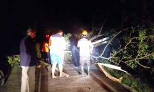Personel BPBD Sragen bersama warga mengevakuasi pohon tumbang di jalan Jambangan-Gambiran, Desa Wonorejo, Kedawung, Sragen, Jumat (10/11/2017) malam. (Istimewa/Warijo/Pemdes Pengkok)