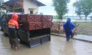 Baid Kurnia Widhi, sedang memindahkan bebek dari kandang jaring ke kotak, di Dusun Gotakan I, Desa Gotakan, Selasa (28/11/2017).(Harian Jogja/Uli Febriarni)