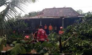 Tim gabungan BPBD dan PMI Sragen mengevakuasi pohon tumbang di depan salah satu rumah warga di Dukuh Tambak, Desa Sribit, Sidoharjo, Sragen, Kamis (16/11/2017) sore. (Istimewa/Warseno/PMI Sragen)