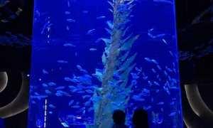 Ilustrasi Jakarta Aquarium (Pictagram)