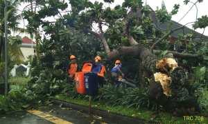 Hujan deras disertai angin kencang kembali melanda wilayah Sleman, Jumat (10/11/2017). Akibatnya, belasan pohon kembali tumbang. (IST/Dok BPBD Sleman)