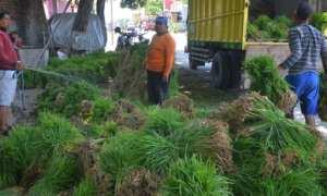 Pekerja memasukkan bibit padi ke mobil truk di sentra penjualan bibit padi di Medini, Undaan, Kudus, Jateng, Rabu (1/11/2017). (JIBI/Solopos/Antara/Yusuf Nugroho)