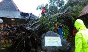 Pohon beringin di kompleks Kepatihan Jogja ambruk, Selasa (28/11/2017). (Gigih M. Hanafi/JIBI/Harian Jogja)